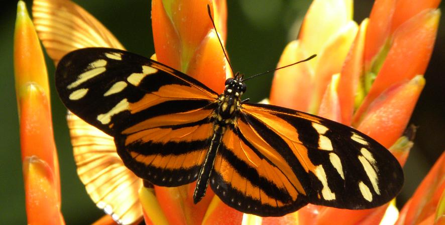 Butterfly-Heather-Boyd